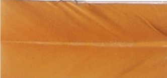 Naranja (42)
